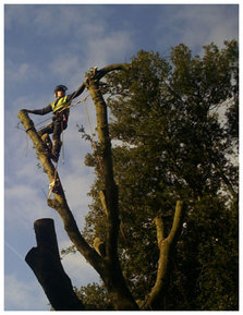 Tree Removals, Ware, Herts