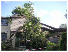 Emergency Tree Services, Buntingford, Herts