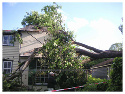 Emergency Tree Service, Potters Bar, Herts