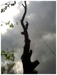 Tree removals, Harlow, Essex